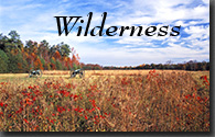 Wilderness Battlefield, Predericksburg and Spotsylvania National Military Park